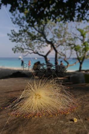 Красивый солнечный пляж на острове Мианг