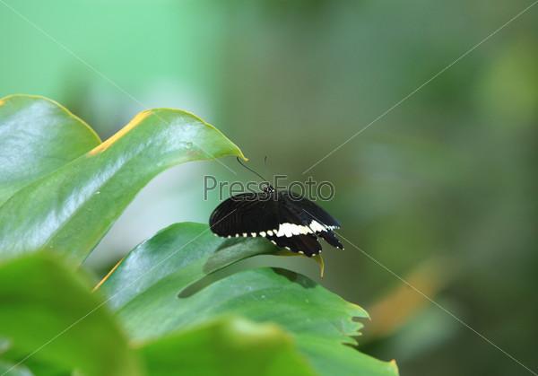 Фотография на тему Черная бабочка