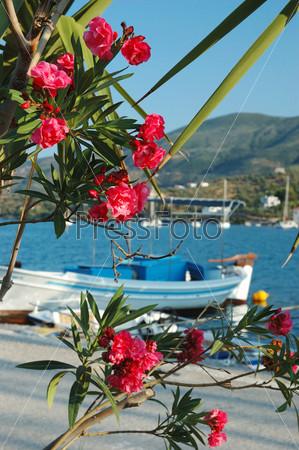 Фотография на тему Красивые розовые цветы