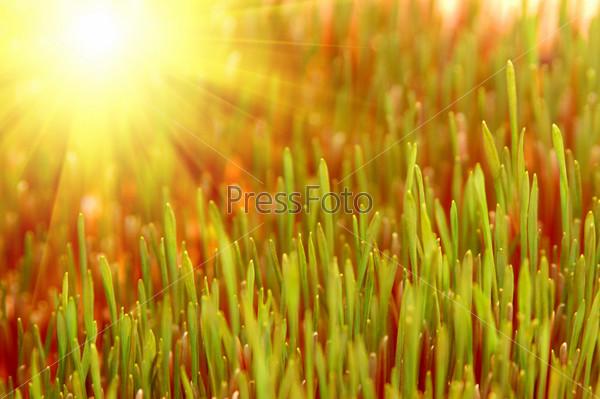 Зеленая трава в солнечных лучах