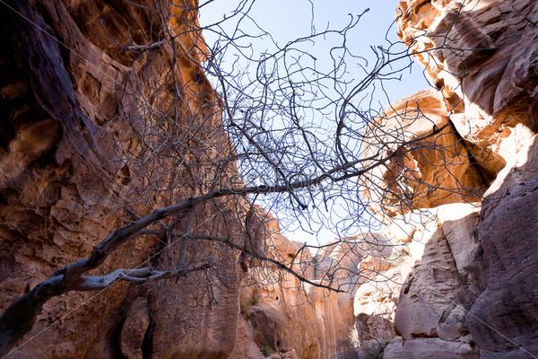 Фотография на тему Песчаные скалы в ущелье Сик в Петре, Иордания