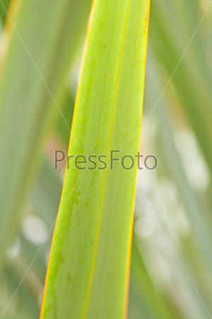 Фотография на тему Зеленый лист экзотического растения в саду