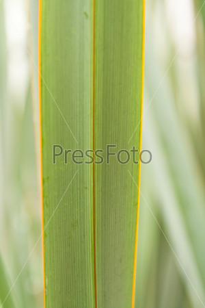 Зеленый лист экзотического растения в саду