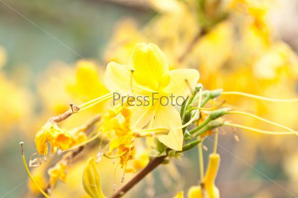 Свежий полевой цветок на естественном фоне