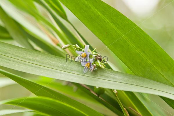 Фотография на тему Свежий полевой цветок на естественном фоне