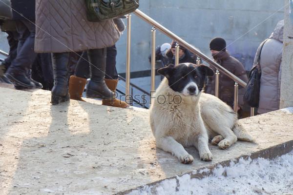 Фотография на тему Одинокая собака, ждущая кого-то, в зимнем городе