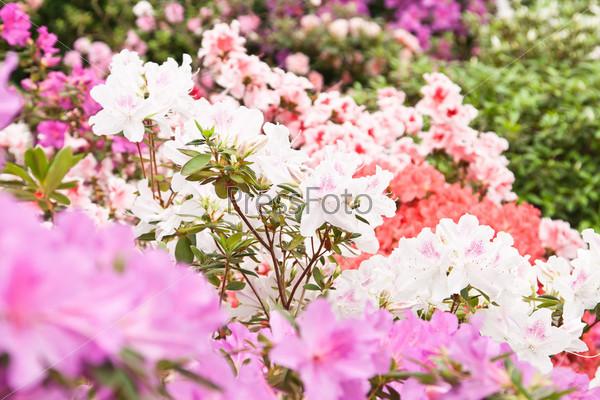 Яркие цветы на кустах