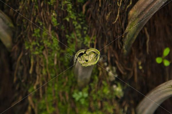 Пальмовый ствол со срезанными лисьтьями