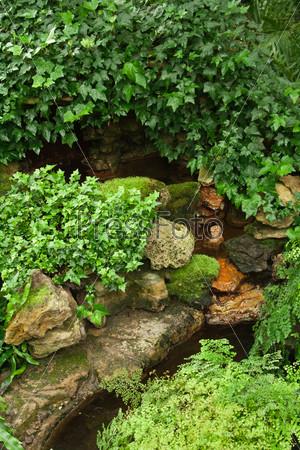 Зеленый плющ на камнях вокруг грота