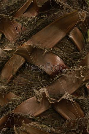 Пальмовый ствол