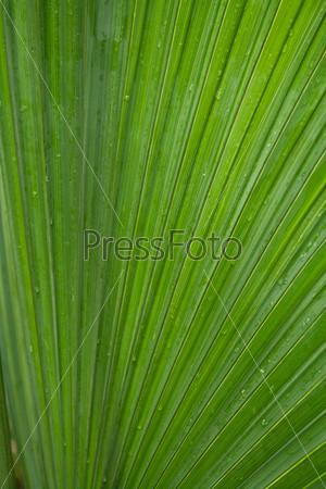 Пальмовый лист с каплями воды крупным планом
