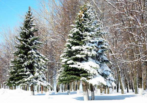 Фотография на тему Снежный лес в апреле