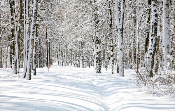 Снежный лес в апреле