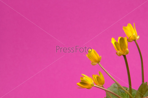 на розовом фоне картинки