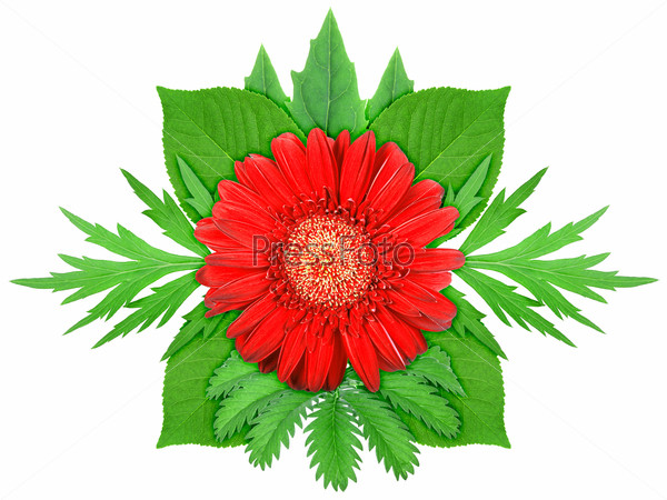 Red flower with green leaf