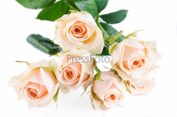 Beautyful roses bouquet