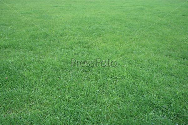Фон. Трава