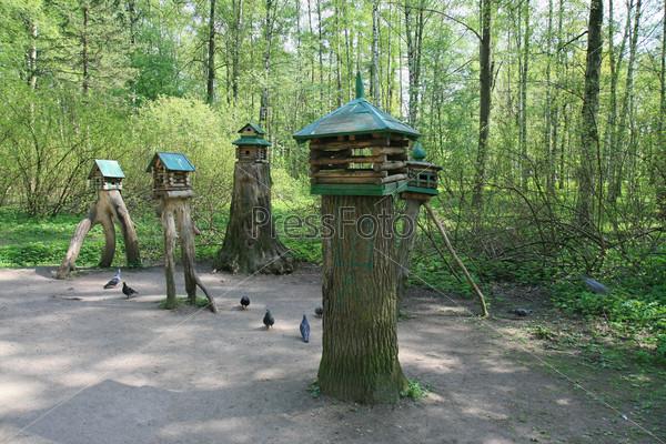 В Центральном парке Санкт-Петербурга. Кормушка для птиц