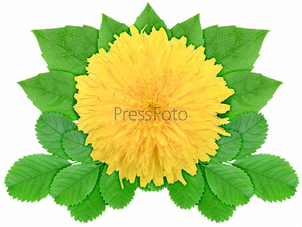 Yellow flower with green leaf