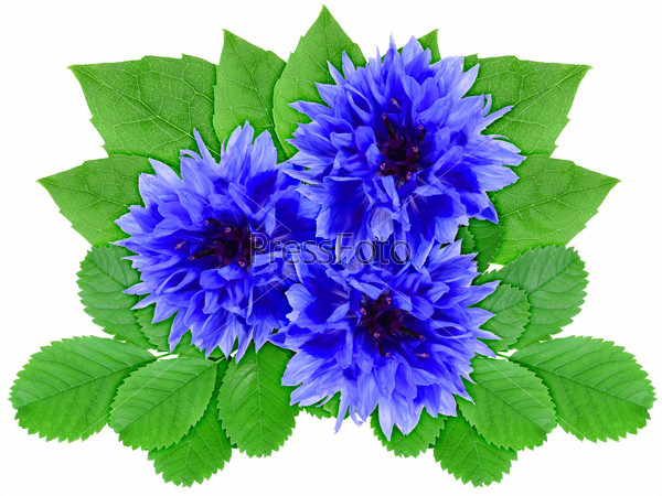 Blue flowers with green leaf