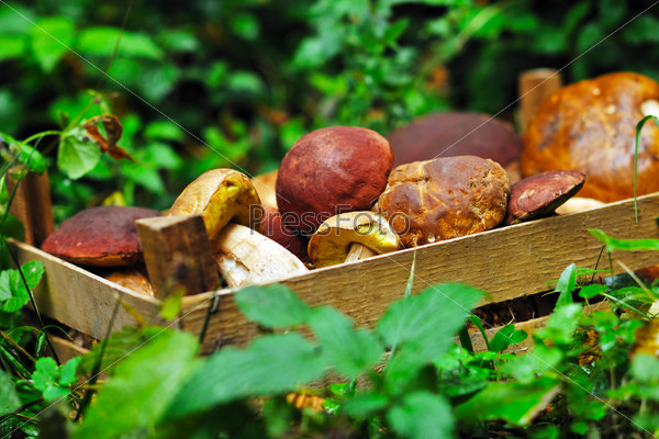 fresh mushroom food outdoor in nature