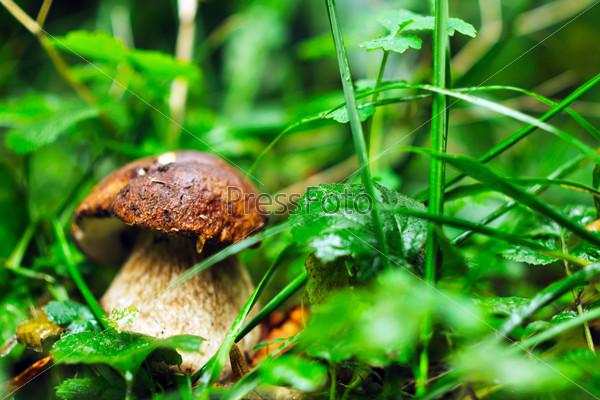 fresh mushroom food outdoor in nature