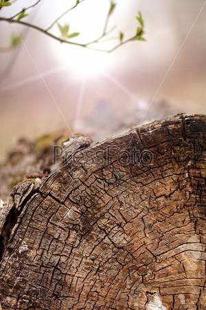 Молодые ростки и спиленное дерево