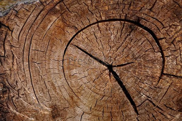 Tree trunk cut