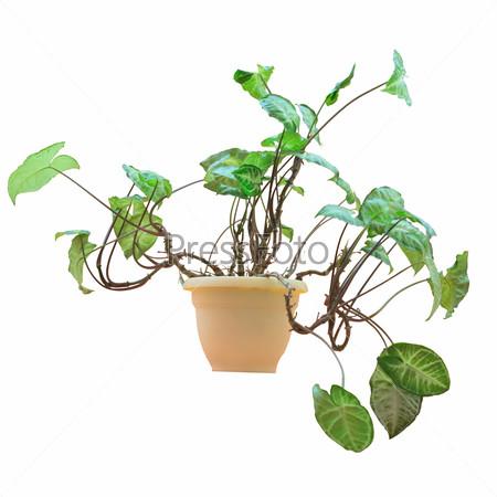 Растение в пластиковом горшке, изолировано на белом фоне
