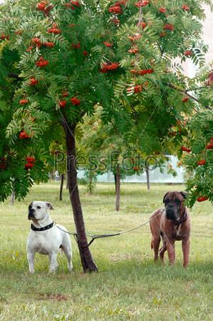 Две собаки под деревом
