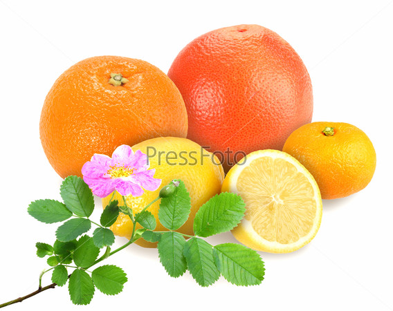 citrus fruits with branch of dog-rose