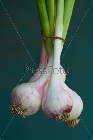 Fresh garlic from a house kitchen garden
