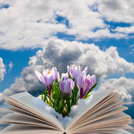 Open book with crocuses
