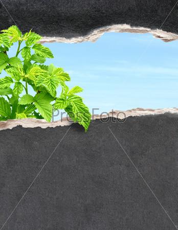 Растение, проросшее сквозь отверстие в бумаге