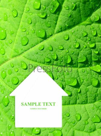 Домик на зеленом листе
