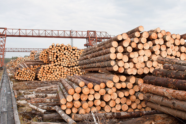 Промышленная площадка с сырьем для деревообработки