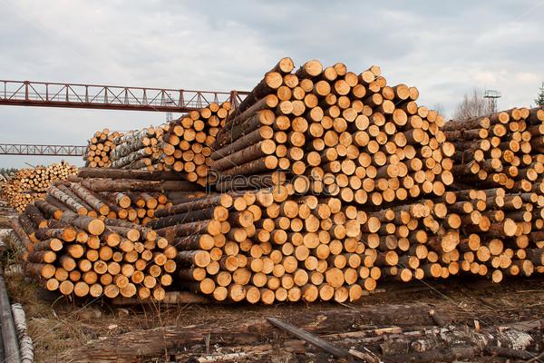 Бревна для деревопереработки