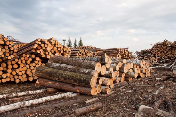 Бревна для деревообработки