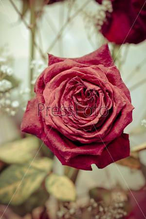 Засохшая красная роза в букете