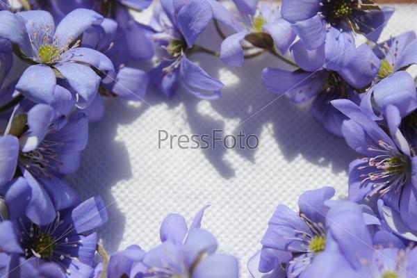 Обрамление из фиалок на бумажном фоне
