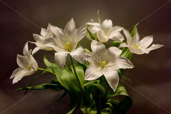 Букет белых тюльпанов на размытом фоне