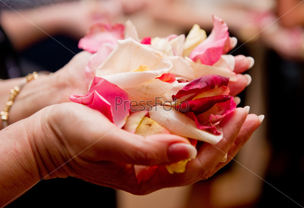 Rose petals in woman's hand