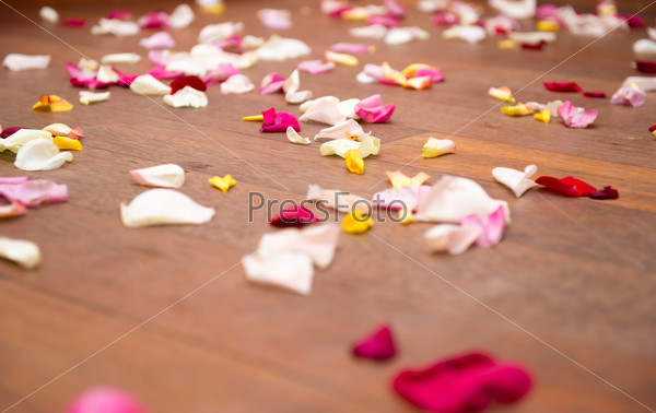 Rose petals on the floor
