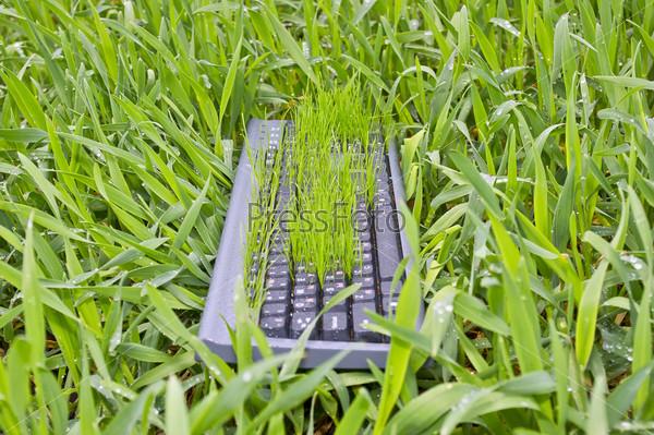 Клавиатура в траве