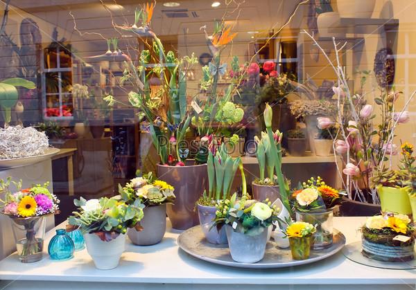 Showcase floral shop. Den Bosch,  Netherlands