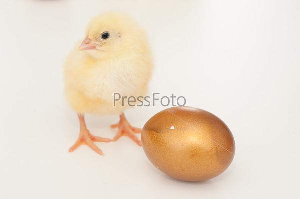 Цыпленок и золотое яйцо