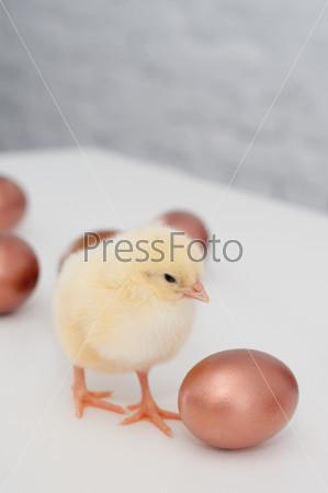 Цыпленок и золотые яйца