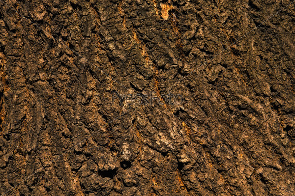 Background - bark