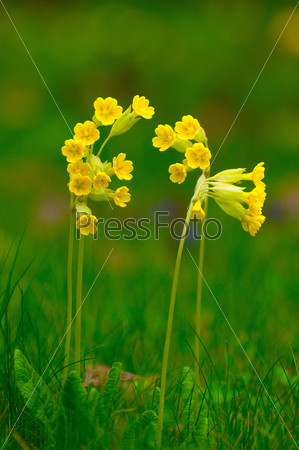 Spring yellow flowers in Fulda, Hessen, Germany