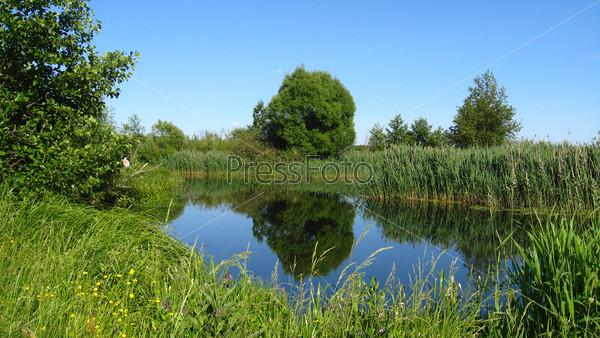 Красивый летний пейзаж с живописным озером